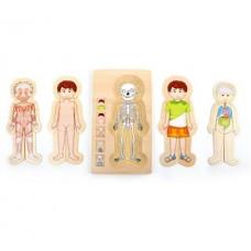 "Slāņu puzle ""Anatomija ll"""